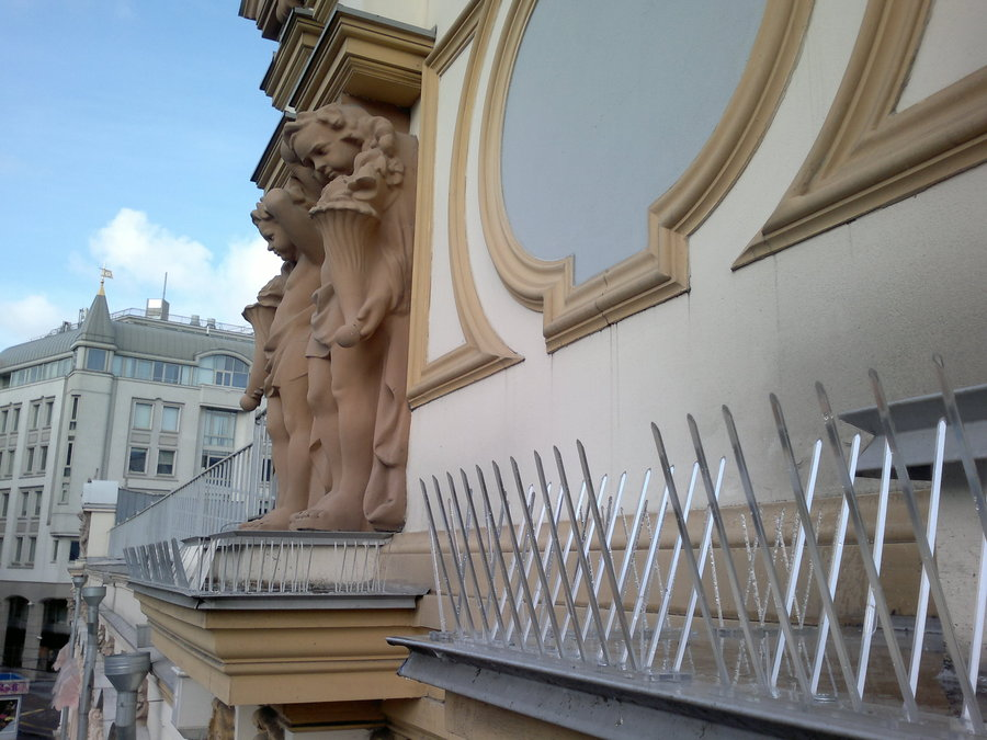Как избавиться от голубей на крыше балкона.